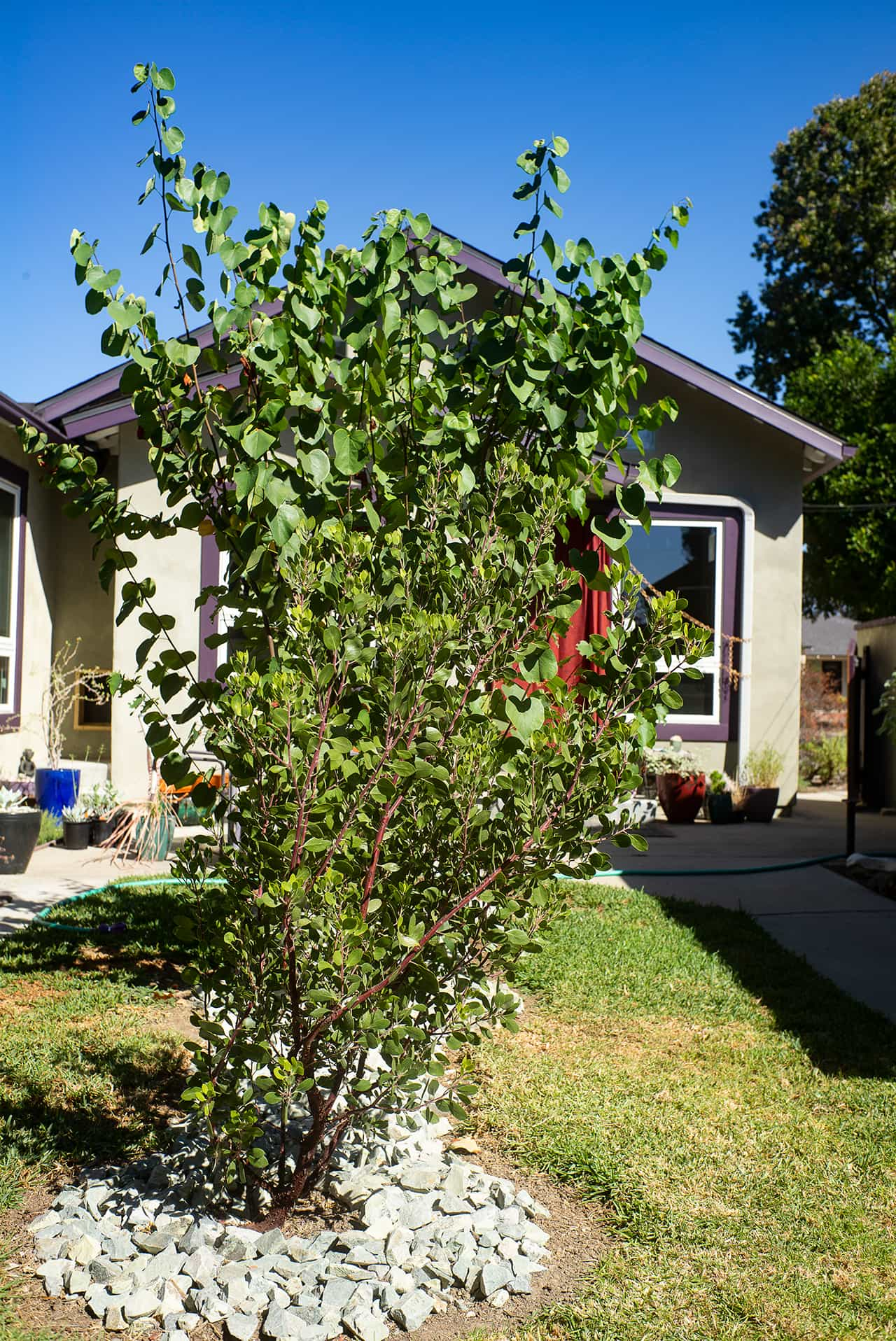 photo of garden 26 in temple city