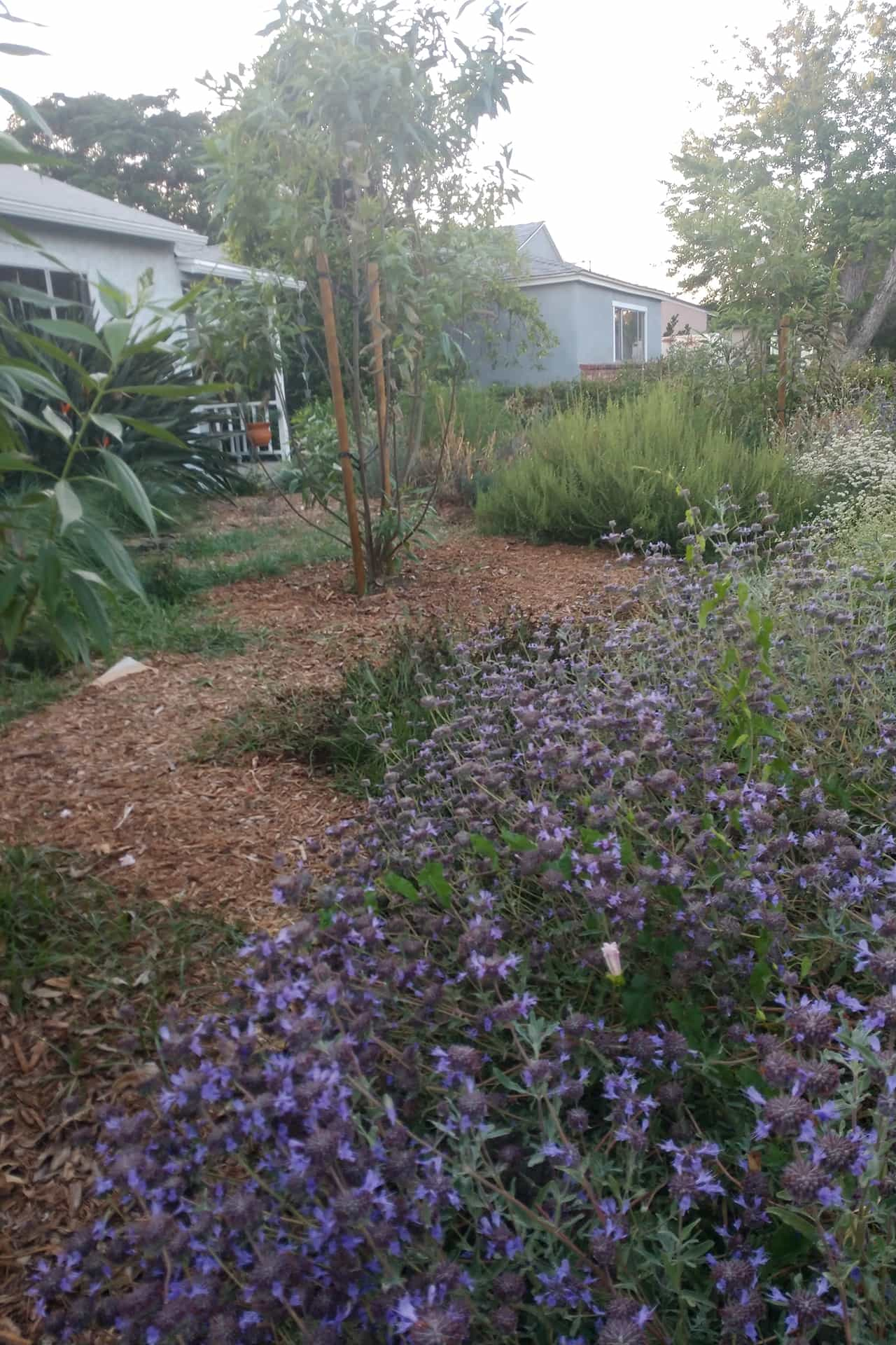 photo of garden 40 in lake balboa